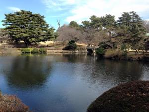 The tranquil space of Shinjuku Gyoen National Park